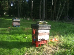 The bees at Glenesk