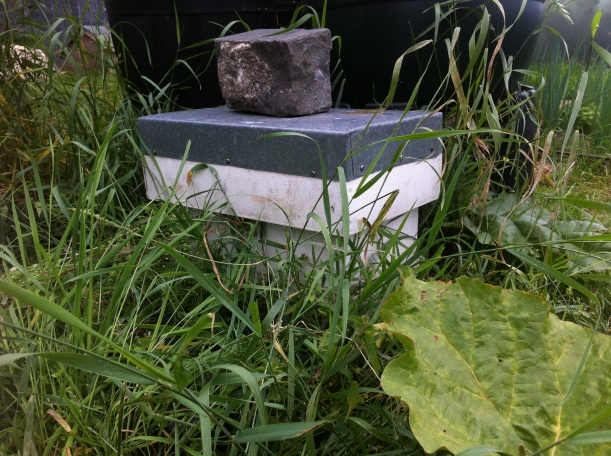 A nucleus hive at the allotment