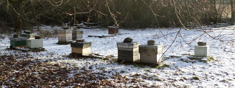 The apiary in January. The hives second and third from the right belong to another beekeeper)