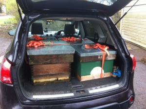 Four hives in the back of the car, ready for the short trip up to their new home